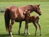 lovas taborhoz